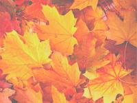 Herfstconcert